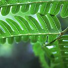 fractal pattern in a fern by lensbaby