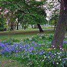 Glockenblumen im West Park, South Shields von BlueMoonRose