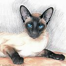 Saphire Eyes... by Siamesecat