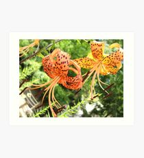 Spotted Tiger Lily Art Print