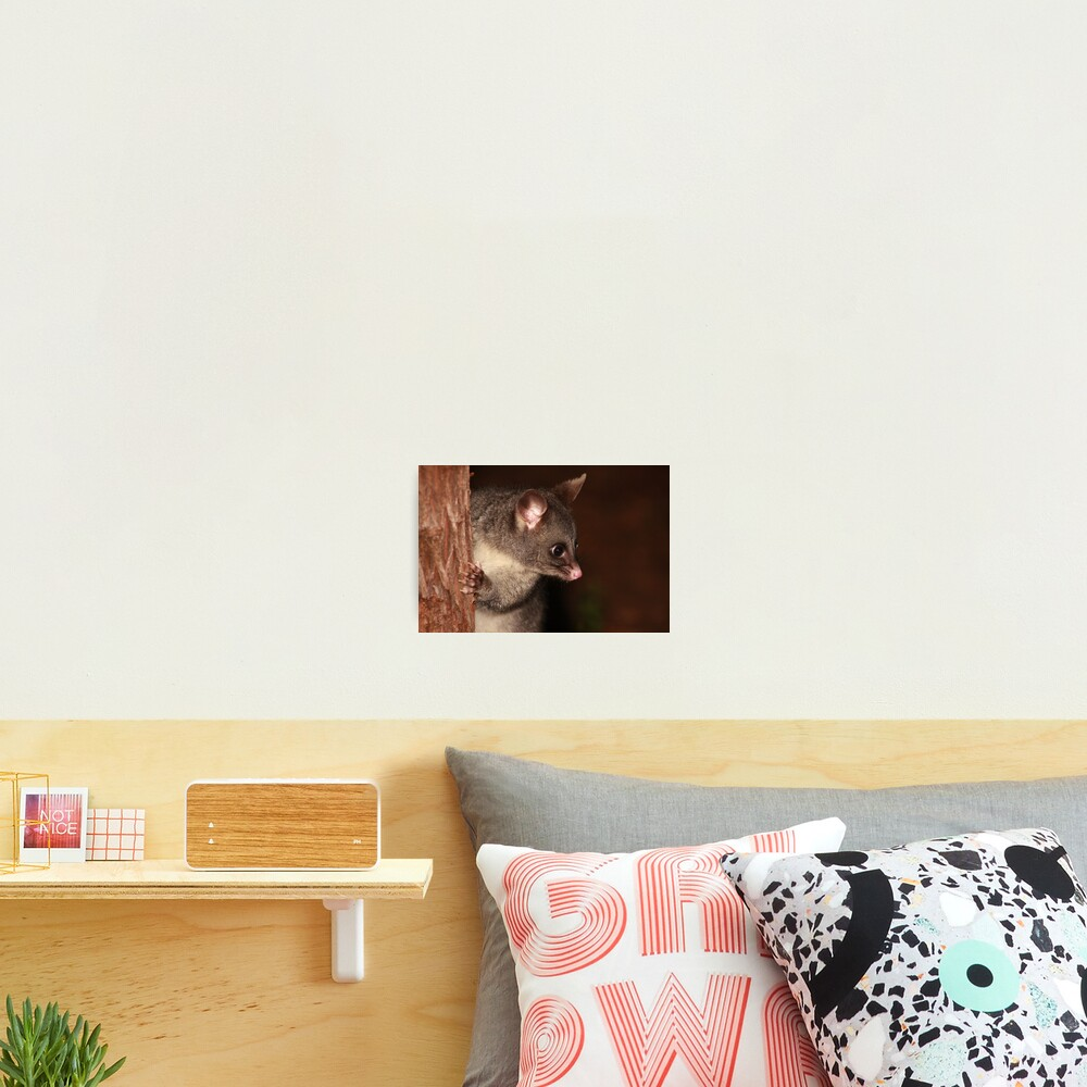 My what big eyes you have! Photographic Print