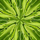 Emerald Aspirations by David Dunham