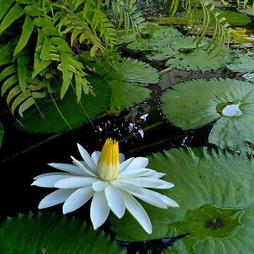 Eden's Pond by PixelMuser
