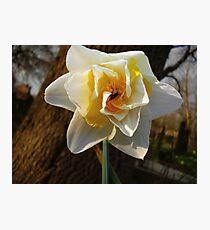 Sweet spring Photographic Print