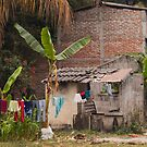 Everyday Life In Las Flores - 1 ©  by © Hany G. Jadaa © Prince John Photography