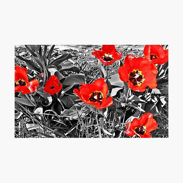Poppies will make them sleep... Photographic Print