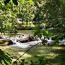 Huatulco Mountain Stream by Leslie van de Ligt