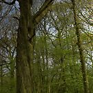 Bluebell Wood 3 by SimplyScene