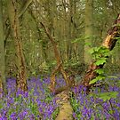 Bluebell Wood 5 by SimplyScene