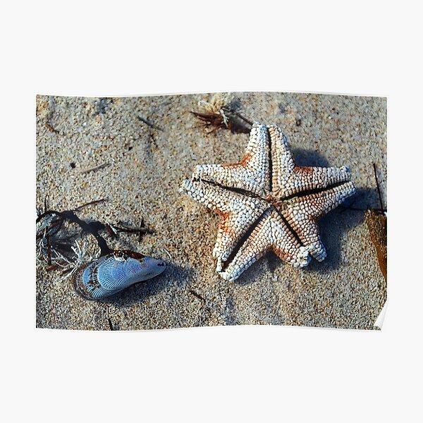 Carrickalinga Starfish Poster