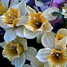 Flowers In The Spring by Linda Miller Gesualdo