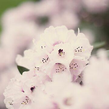 Pink spring flowers by gailgriggs