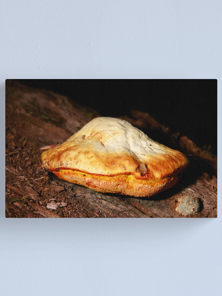 Alternate view of Chicken of the woods Canvas Print
