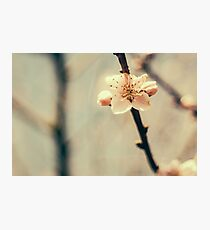 White Tree Blossoms Photographic Print