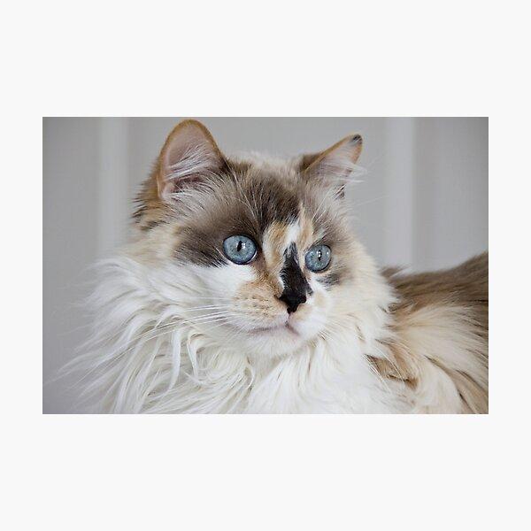 Blue-Eyed Mia Photographic Print