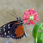 Butterfly On A Lantana Blossom by Len Bomba