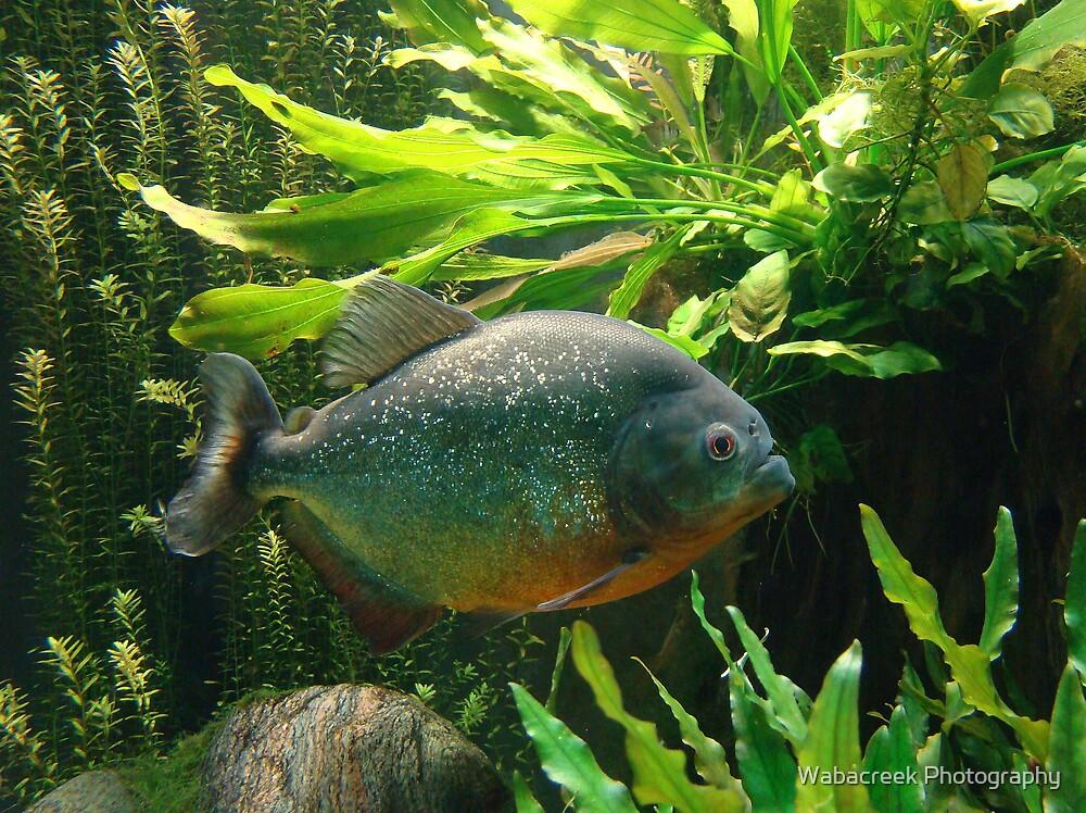 Fishy Tale by Jocelyne Phillips