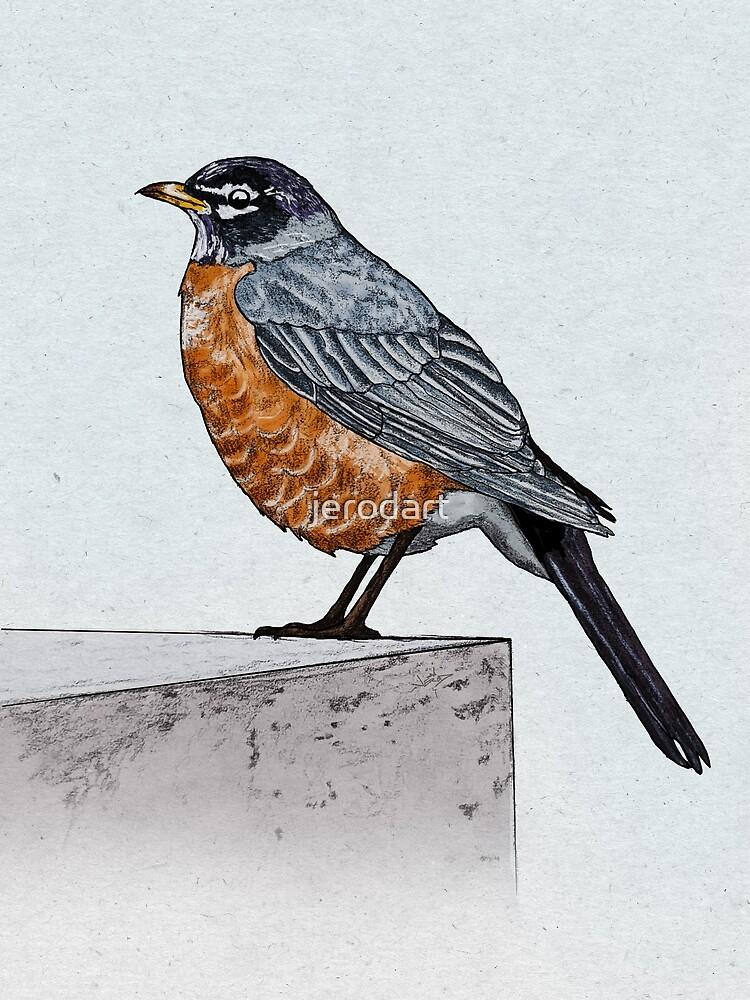 Robin by jerodart
