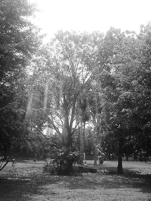Parque Omar by Victoria Palma