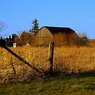 Evening Fence by Larry Llewellyn