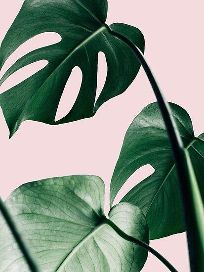 Monstera Blätter, Pink, tropische Blätter, Blatt, moderne Kunst, Wandkunst, Print, minimalistisch, modern, skandinavischen Druck von juliaemelian