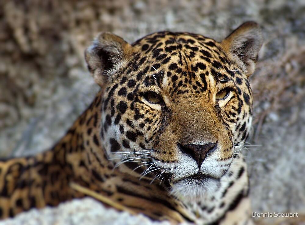 Jaguar by Dennis Stewart