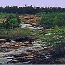 Rocky Mountain Stream by Linda Miller Gesualdo