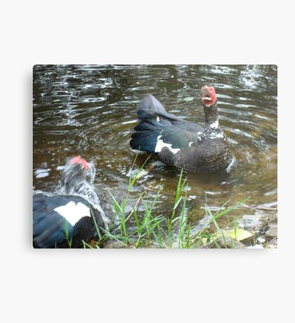LAUGHING OUT LOUD (LOL) - DUCK STYLE Metal Print