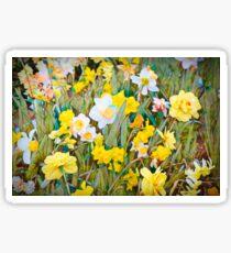 Daffodils 13 Sticker