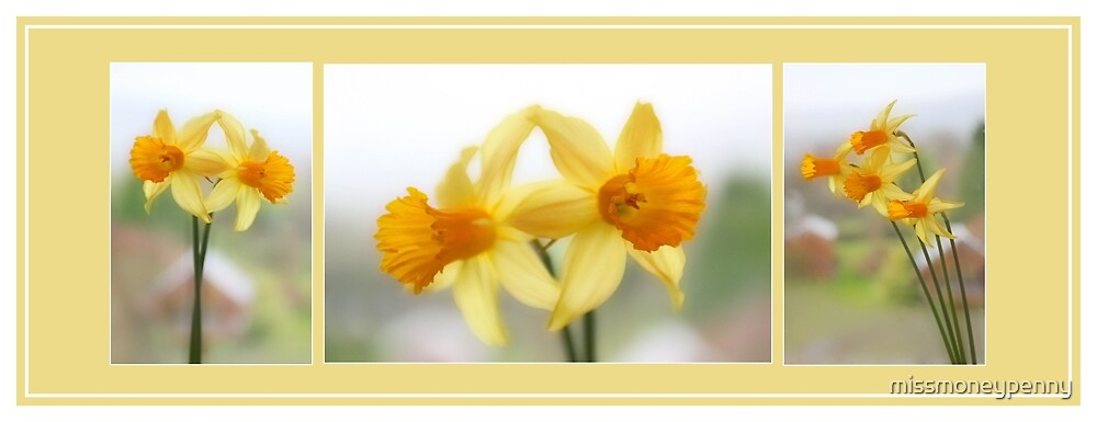 Daffodil Collage by missmoneypenny