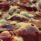 shells by immunetogravity