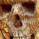 Skull by Paul Reay