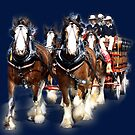 CUB Clydesdale Team, with Dalmation - Warragul, Victoria by Bev Pascoe