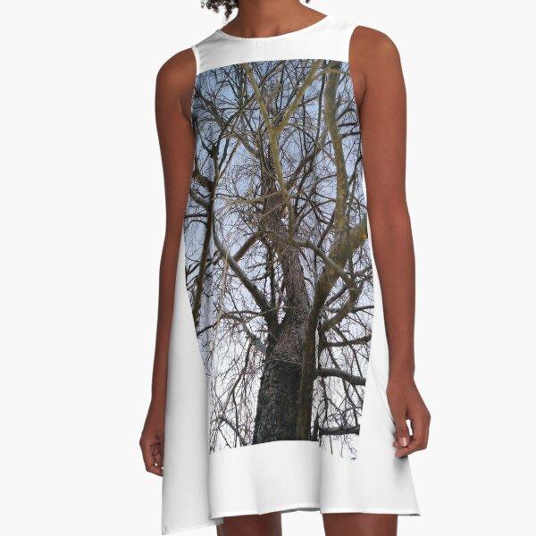 Shagbark Hickory A-Line Dress