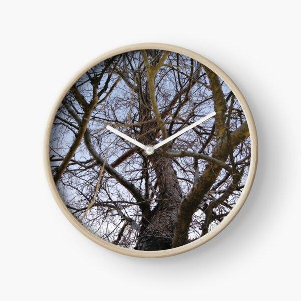 Shagbark Hickory Clock