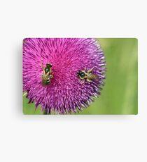 bees on flower spring season Canvas Print