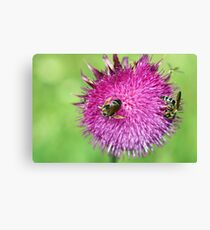 bees on flower close up spring season Canvas Print