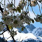 Goodbye Winter, welcome spring by Stefan Trenker