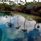 Lagoon Reflections by ctheworld