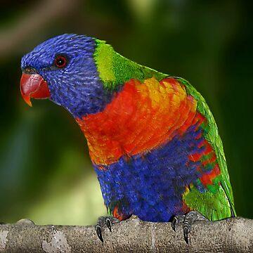 Rainbow Lorikeet by GreenEyedHarpy