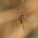 Spider by Robert Abraham