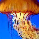 Jelly by Abigail Hiebert