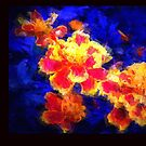 Splash OF 3-D by glink