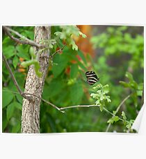 Tiny tree??? or HUMONGOUS BUTTERFLY??? Poster