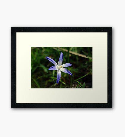 Singleton Framed Print