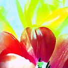 Abstract Of Tulips by SexyEyes69