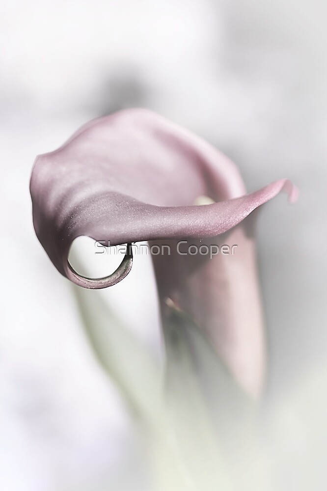 Calla Lily by Shannon Beauford