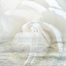 Sea Haze White Brush Rose/Ellen & Candy by Candy Paull