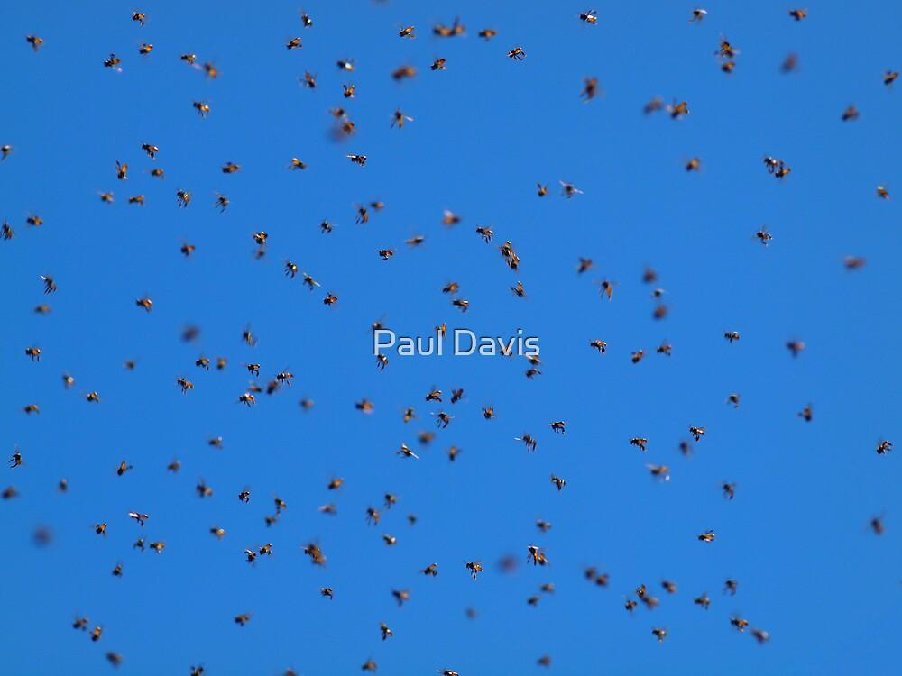 The Swarm... by Paul Davis
