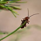 On a pine needle by Tonia Delozier